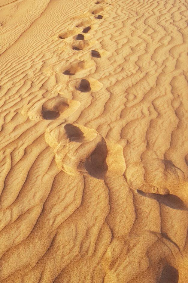 두바이 사막투어 (21)