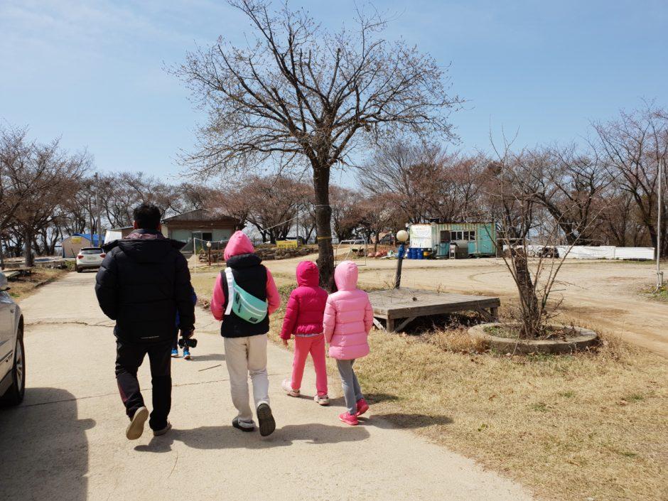 벚꽃캠핑 (31)