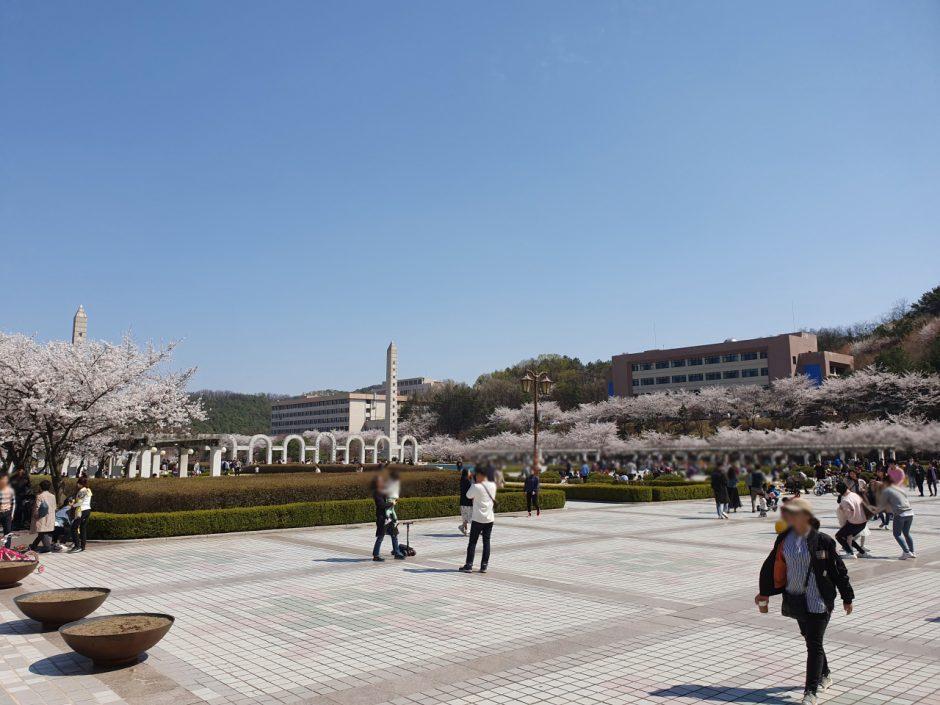 수원 벚꽃명소 (13)