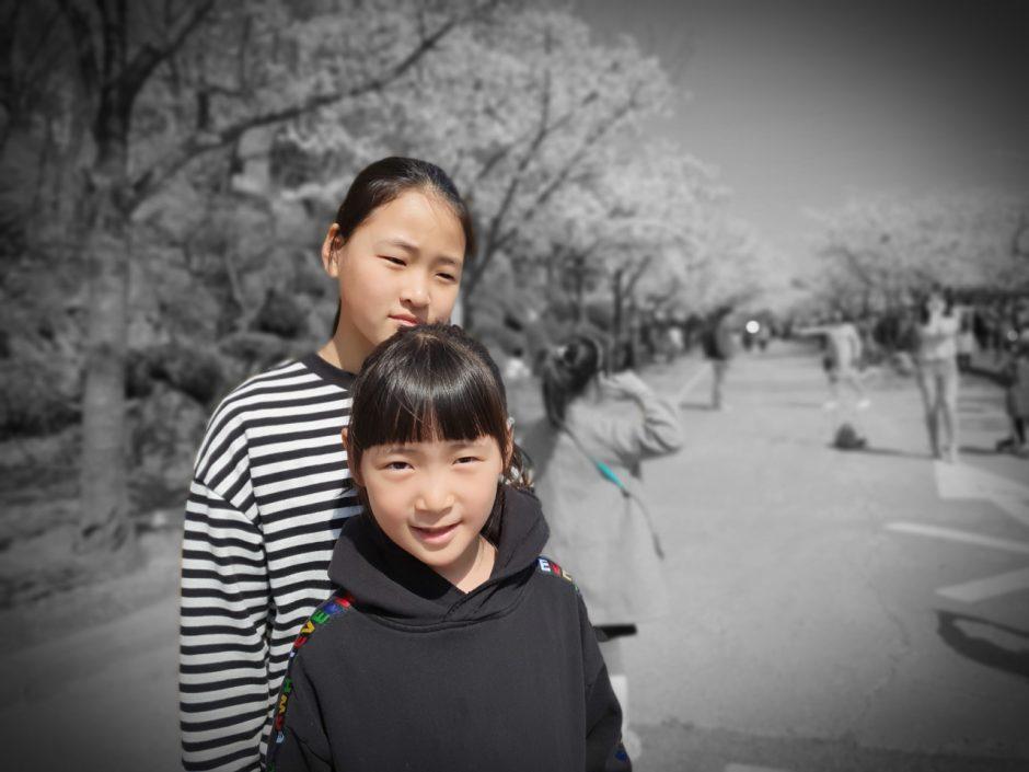 수원 벚꽃명소 (10)