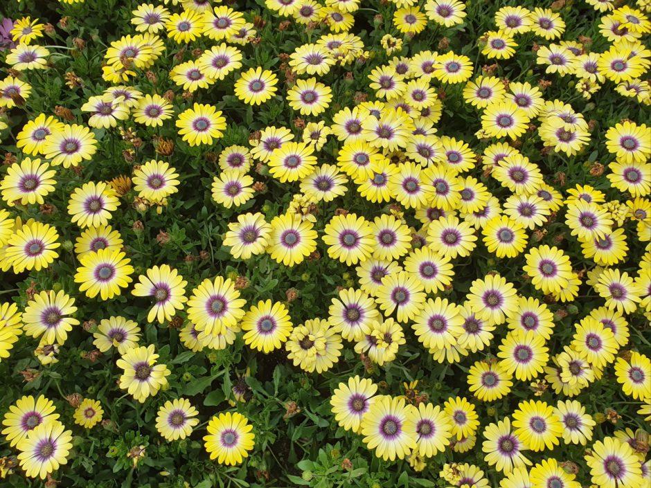 에버랜드 꽃